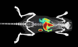 Better Understand Biology Of Disease Using In Vivo Fluorescence Imaging