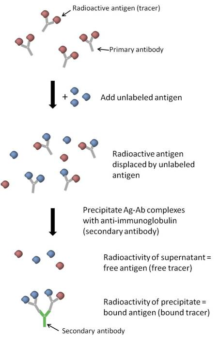 Schematic for a Radioimmunoassay